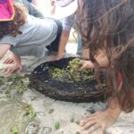 זיתים על עקל בגן הארכיאולוגי כפר סבא
